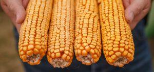 US Senate OKs compromise GMO labeling bill