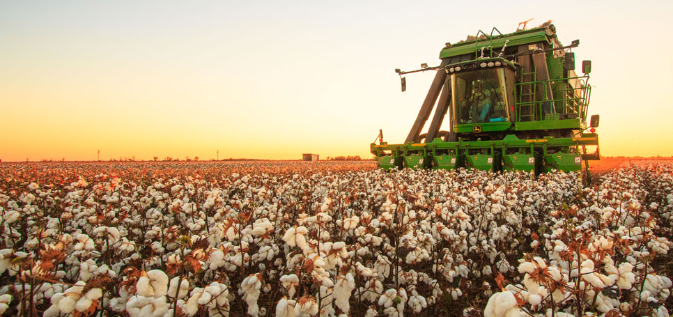 A cotton picker glides through a southwest Oklahoma field during harvest.