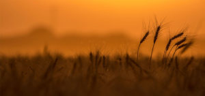 Farm Bureau supports death tax repeal measure
