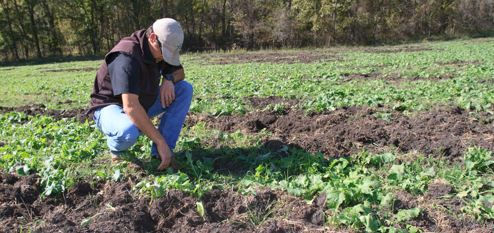 A rancher examines feral hog damage in his field.