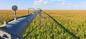 A center pivot irrigates a field of corn.