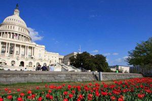 Congress sends GMO disclosure bill to president