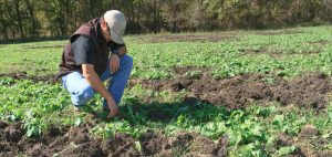 A farmer examines a field damaged by feral hogs.